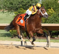 Pimlico Special Preview: Stanford Stands Out