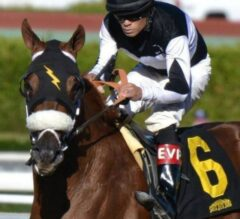 Why Horse Racing Betting is More Fun Than Casino Betting