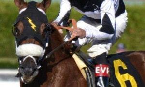 Smoken_Legacy_racehorse_large