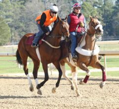 Oaklawn Park Barn Notes: Local Arkansas Derby Runners Prepare to Work