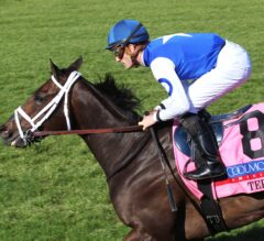Tepin Headlines 30 Nominations to G1 Ricoh Woodbine Mile