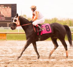 Black-Eyed Susan (G2) Undercard Stakes Draw 203 Nominees