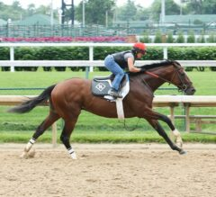 Churchill Downs Barn Notes: Belmont-Bound Duo of Brody's Cause, Cherry Wine Breeze