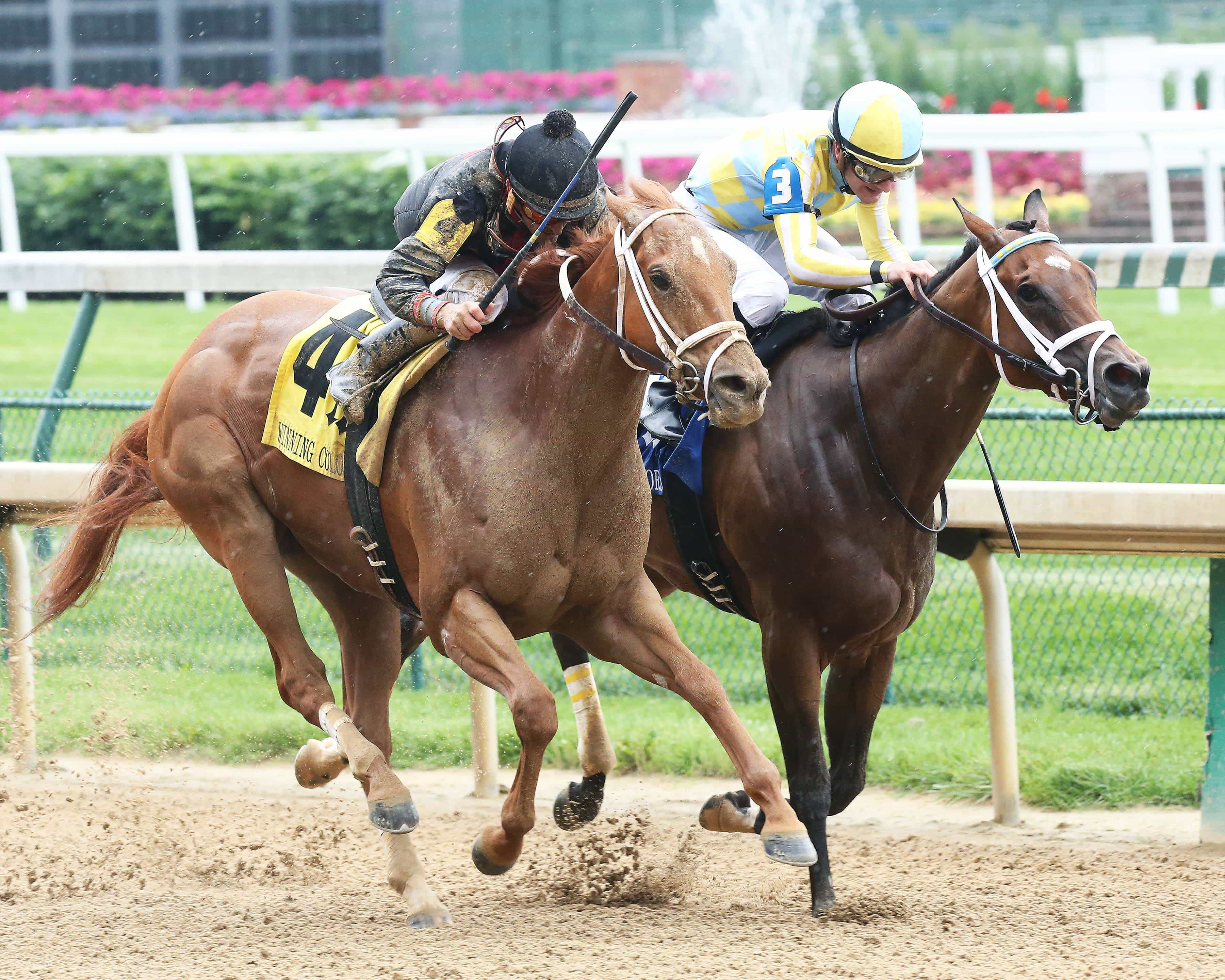 DIVA EXPRESS - I'm A Looker - Dead Heat - The Winning Colors Gr III - 13th Running - 05-28-16 - R10 - CD - photo credit: Churchill Downs/Coady Photography