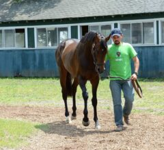 Belmont Park Notes: Belmont Contender Exaggerator Gets a Feel for Main Track