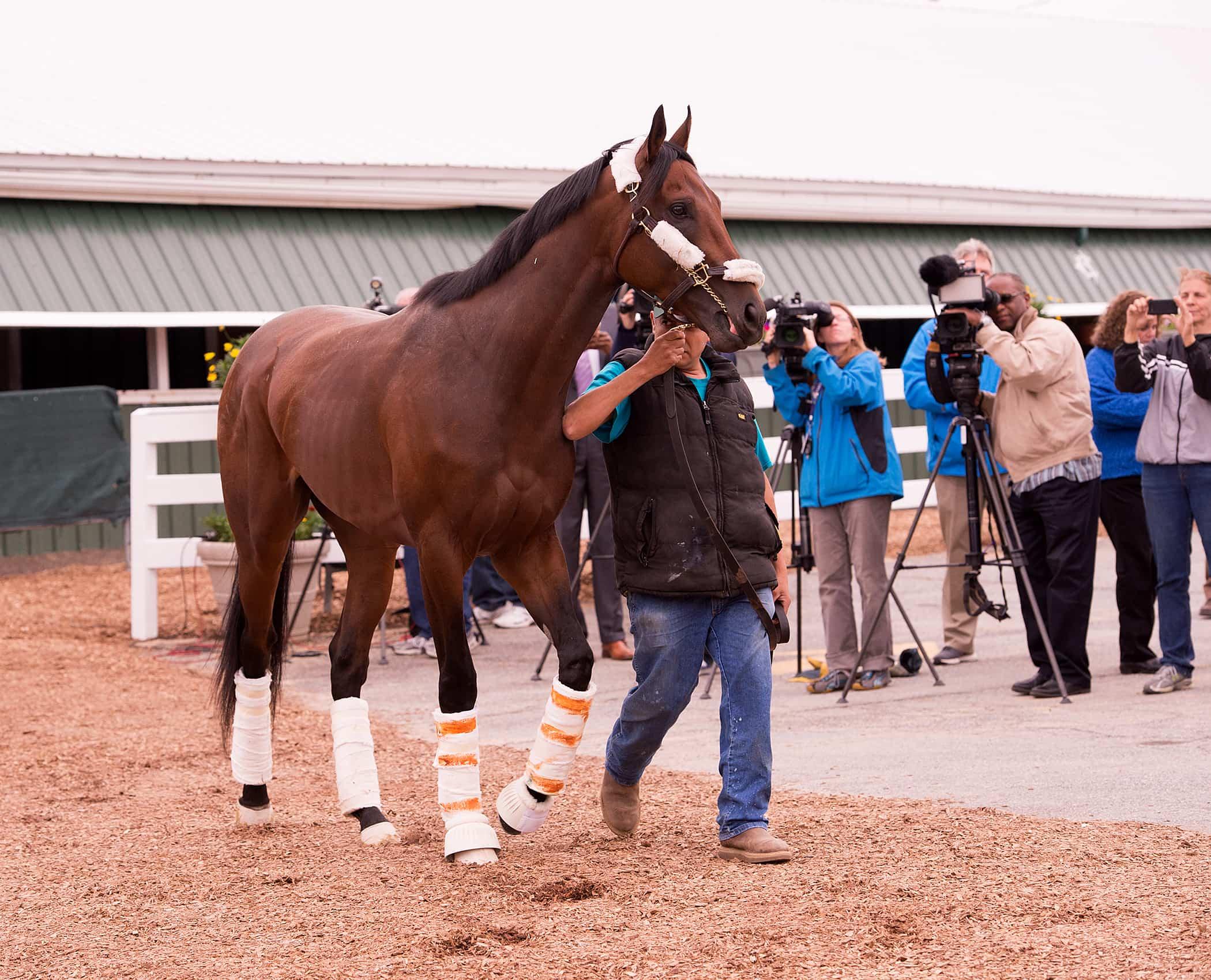 Nyquist 05arrive - Maryland Jockey Club Photo
