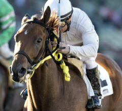 San Onofre, Wild Dude and Coastline Look to Hold Off Invader Subtle Indian in G2 Kona Gold Stakes