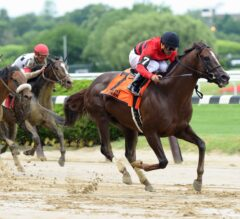 New York-Breds Take Center Stage for Big Apple Showcase