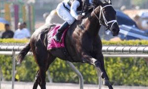 Illuminant wins Grade I, $300,000 Gamely Stakes - Zoe Metz Photo