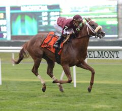 Lady Shipman Shines in Rain to Capture License Fee at Belmont Park
