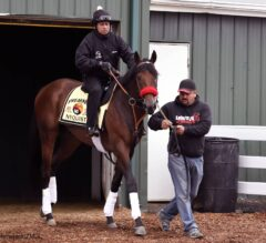 Preakness-Bound Nyquist Gets Acquainted with Pimlico Racetrack