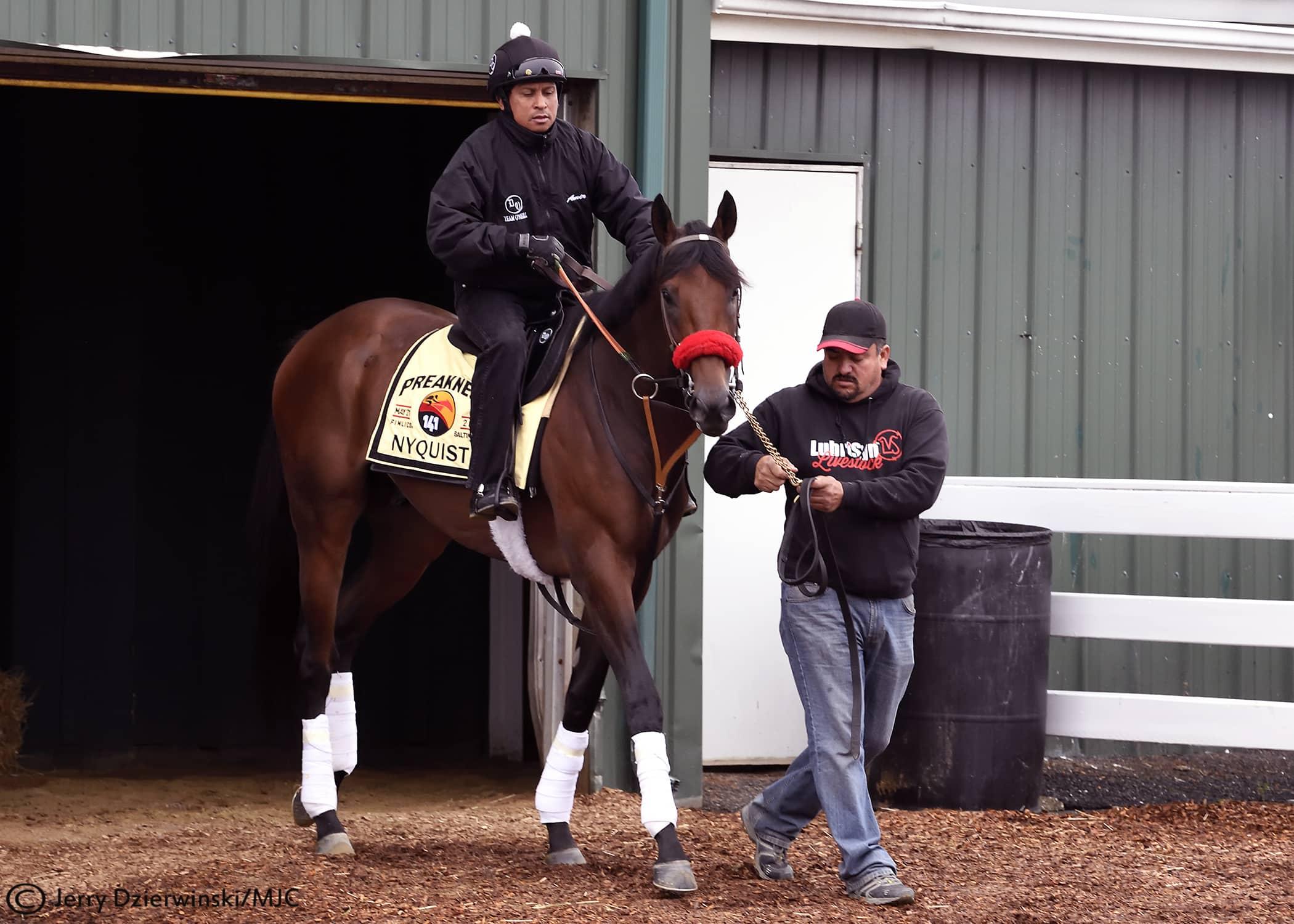 nyquist5-11- Photo Credit: Jerry Dzierwinski/Maryland Jockey Club