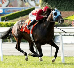 Longshot Si Sage Goes Gate to Wire to Win G2 Charles Whittingham Stakes