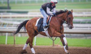 Beholder May 29 16 gallop - Photo Credit: ©Zoe Metz/Clockers' Corner