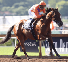 Champion Beholder Cruises in G1 Vanity Mile for Eighth Consecutive Win