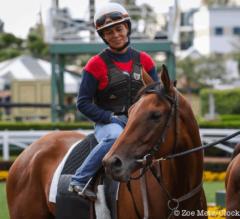 Santa Anita Stable Notes: Champion Beholder is Bigger, Bolder, Better