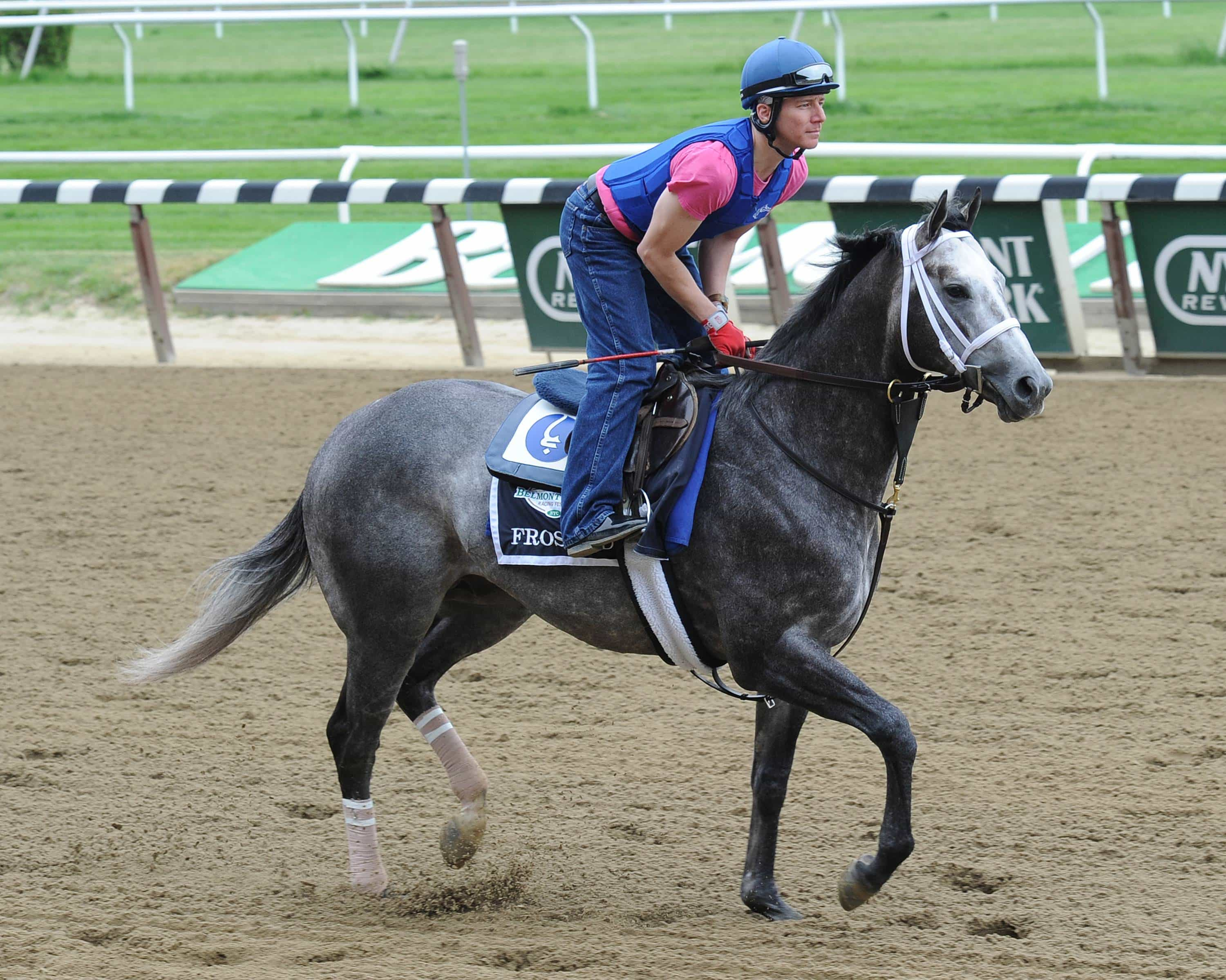 Frosted May 27 credit Susie Raisher/NYRA