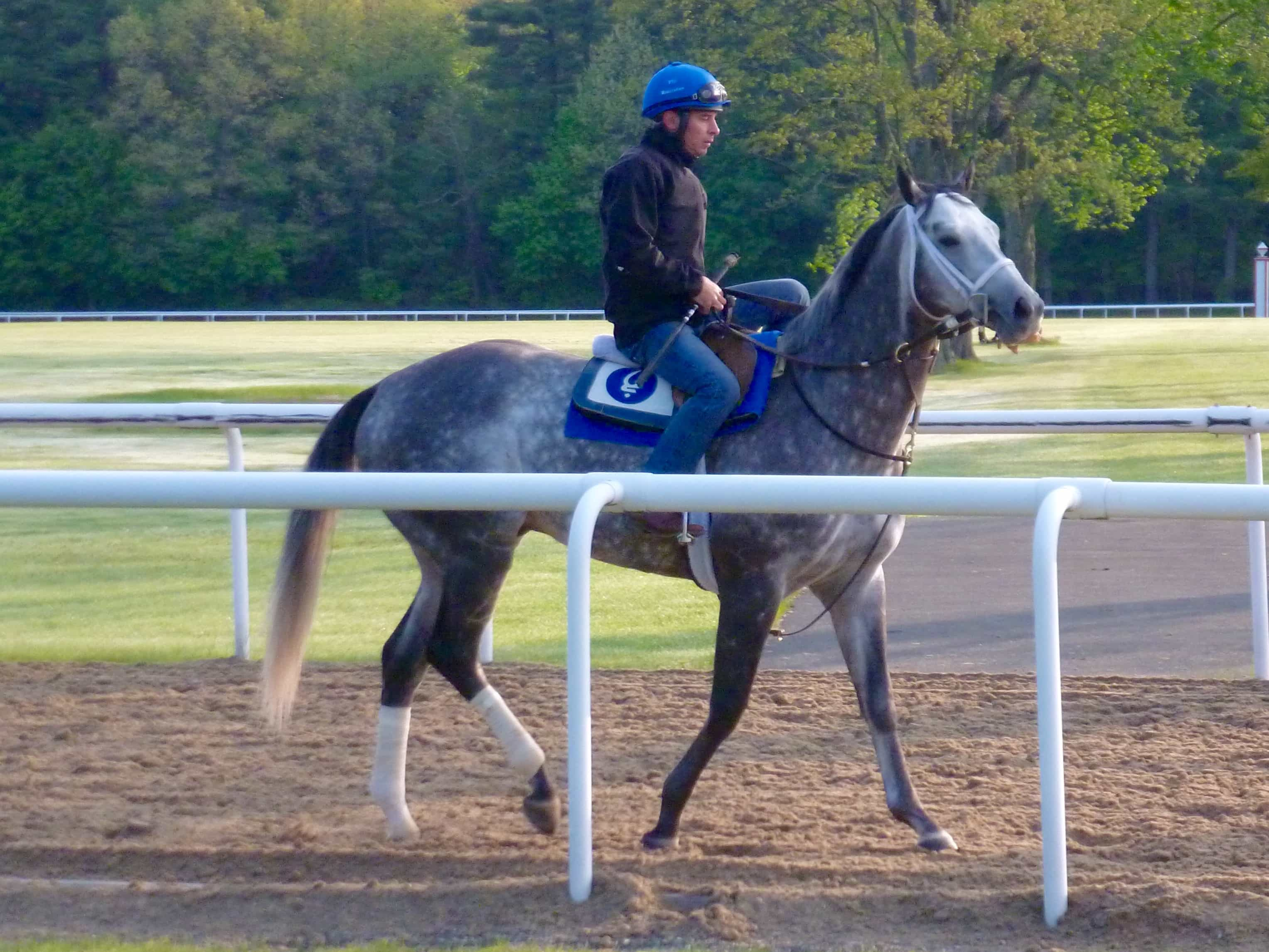 Frosted training in Saratoga - May 20, 2016 - Photo: Michael Spector