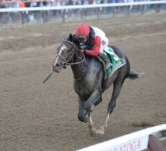 Hopeful Stakes Preview: Lukas Aims for Seventh Hopeful Victory