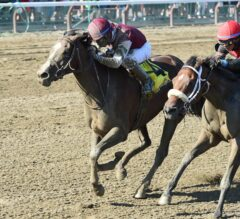 Haveyougoneaway Runs Down Paulassilverlining in G2 Honorable Miss