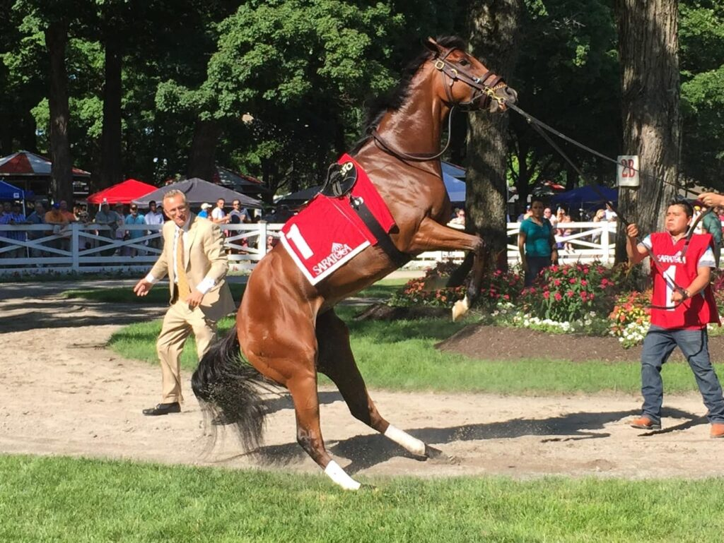 Olive Branch acting up in the Saratoga paddock before the Grade-3 Schuylerville (Photo: Michael Spector)