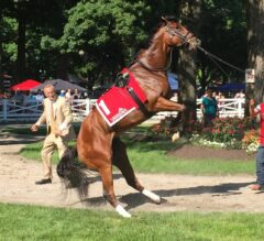 Adirondack Stakes Preview: Re-drawn Race Now a Field of Seven