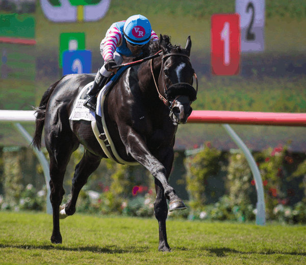 Midnight Storm wins Del Mar Mile © Zoe Metz for Del Mar Thoroughbred Club
