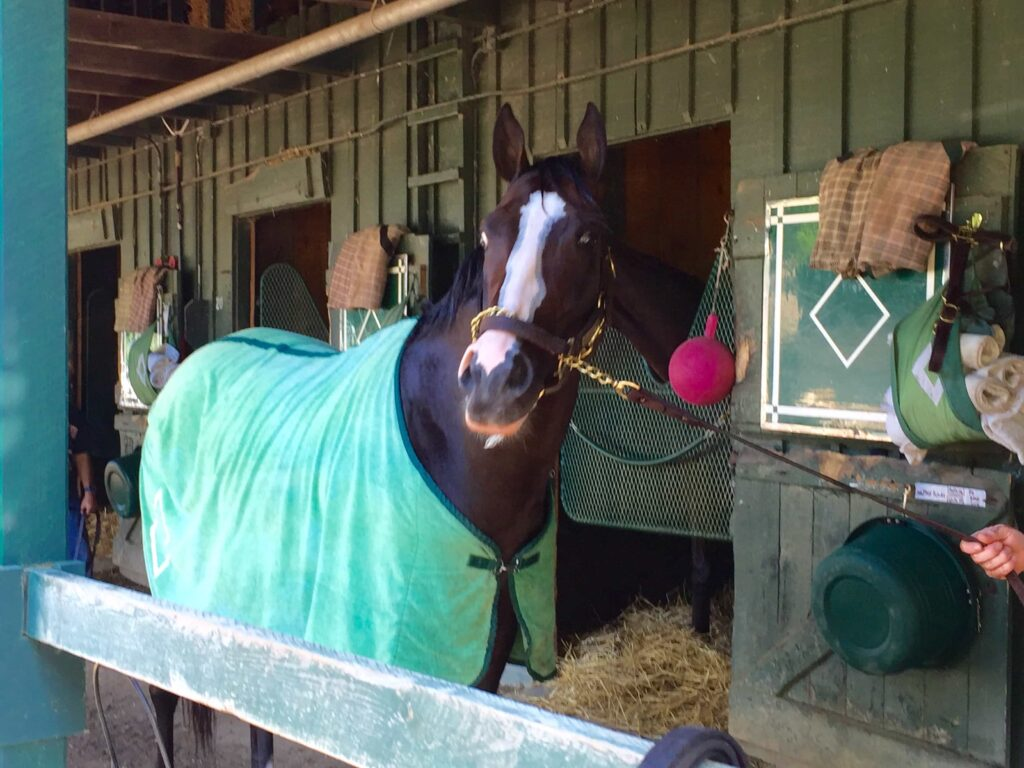 Tourist at the Bill Mott barn in Saratoga in late June (Photo: Michael Spector)
