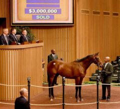 Half-Brother to Champion Beholder Brings $3 Million