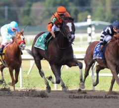 Noholdingback Bear G3 Too Much in $300,000 Gallant Bob Stakes
