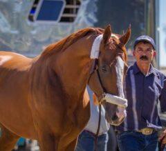 Champion California Chrome Arrives Sunday Morning at Santa Anita