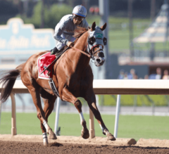 Breeders' Cup Classic Preview: Can Chrome Bring It Home?