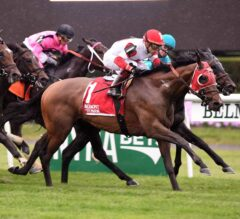 Hollywood Derby Preview: Chad Brown Sends Three Out West