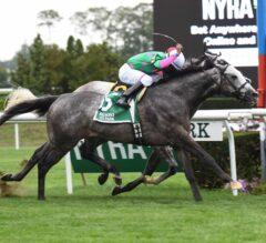 Pure Sensation Gutty in Narrow Belmont Turf Sprint Invitational Win