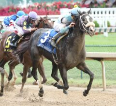 Racing Dudes Three Stars of the Week: Tom's Ready Impresses in Bold Ruler