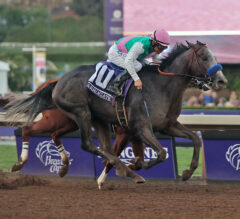13 Breeders' Cup Trends to Know