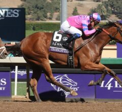 Breeders' Cup 2017 Longshot Selections