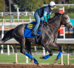 Santa Anita Stable Notes: Arrogate Set for San Pasqual New Year's Day