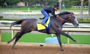 ARROGATE - January 15, 2017 - Mike Sekulic