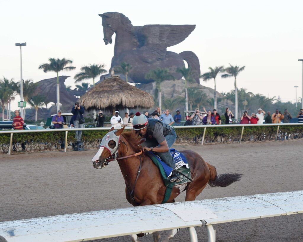 California Chrome last breeze - Gulfstream Park - Pegasus World Cup - Credit Leslie Martin/Coglianese Photo