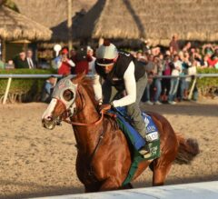 California Chrome Draws Crowd for Pegasus Workout at Gulfstream Park