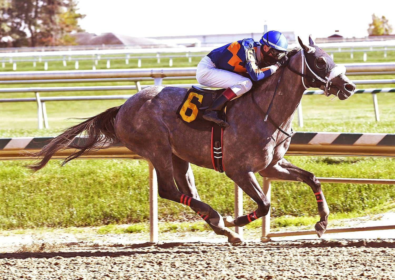 El Areeb in his maiden win in October at Laurel Park - Photo: Jim McCue/Maryland Jockey Club