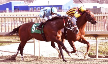 Irish War Cry (inside) just outduels O Dionysus in the Marylander (Photo courtesy Jim McCue/Maryland Jockey Club)