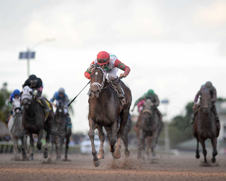 Tommy Macho wins Hal's Hope - Credit: Leslie Martin/Coglianese Photo