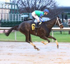 Uncontested Likely to Skip Rebel, Next Start Arkansas Derby