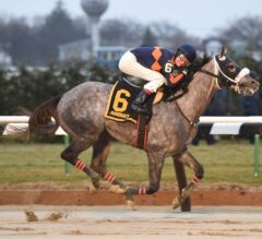 Withers Stakes Preview: El Areeb Looks to Build Resume