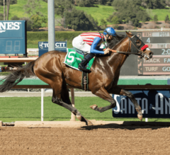 Iliad Wins G2, $200,000 San Vicente Stakes in First Start With O'Neill