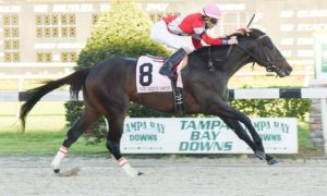McCraken wins Sam F. Davis Stakes - Tampa Bay Downs - 2-11-17 - Photo Credit: SV Photography