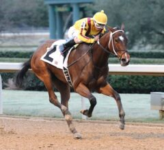Azeri Stakes Preview: Terra Promessa Super Sharp at Oaklawn