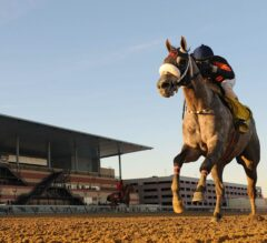 El Areeb Works Thursday for G2 Wood Memorial